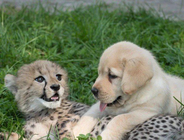 Друзья всегда вместе