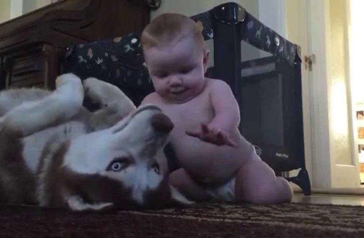 Ребенок играет с собакой