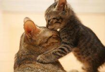 Животные – настоящие мамы