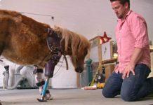 Мужчина изготавливает протезы для животных