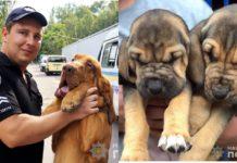 Поліцейські собаки
