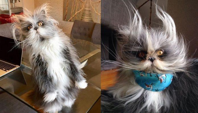 Безумный кот Атчум