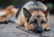 Собака кілька днів сидів біля магазину і чекав господаря