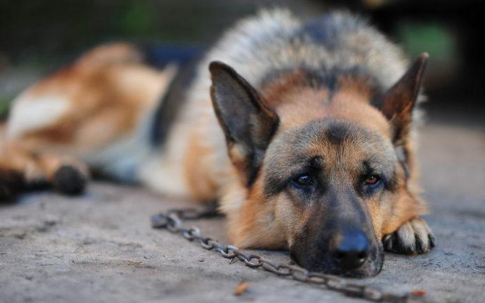 Собака несколько дней сидела возле магазина и ждала хозяина