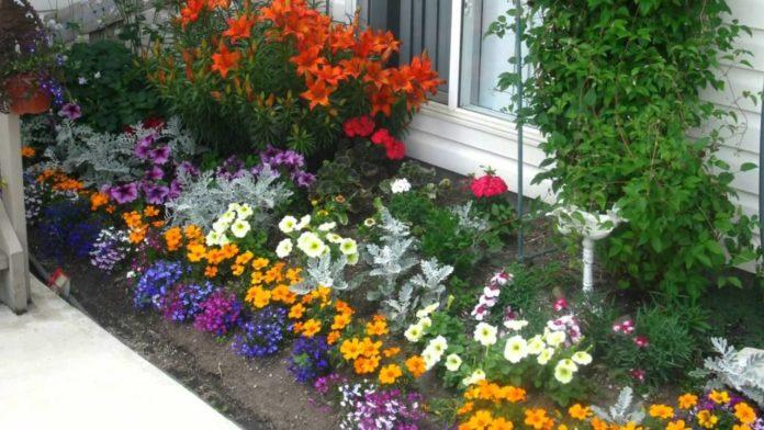 Прикрасьте свій двір квітами