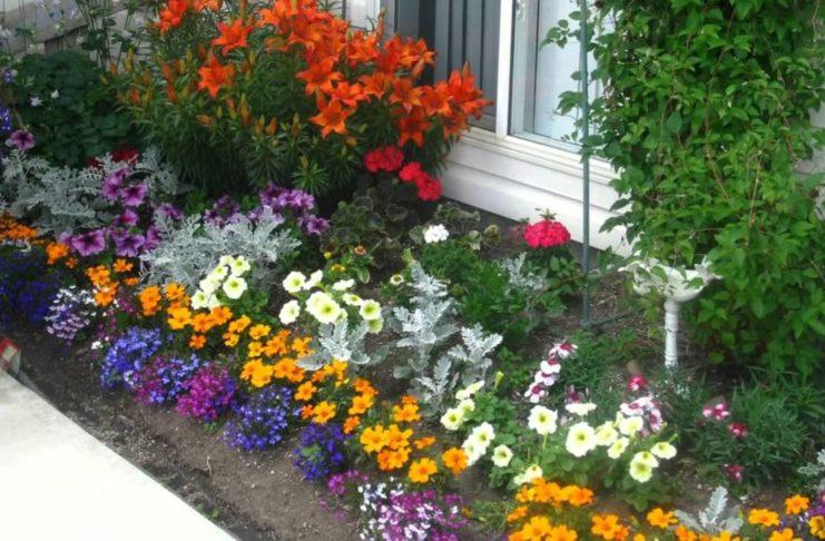 Украсьте свой двор цветами