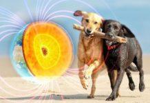 Собаки орієнтуються по геополю Землі
