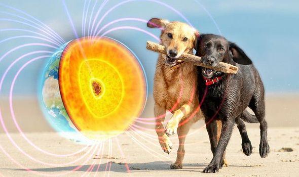 Собаки ориентируются по геополю Земли