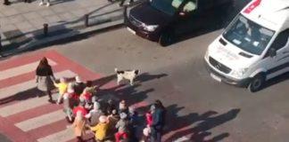 Собака следит за безопасностью
