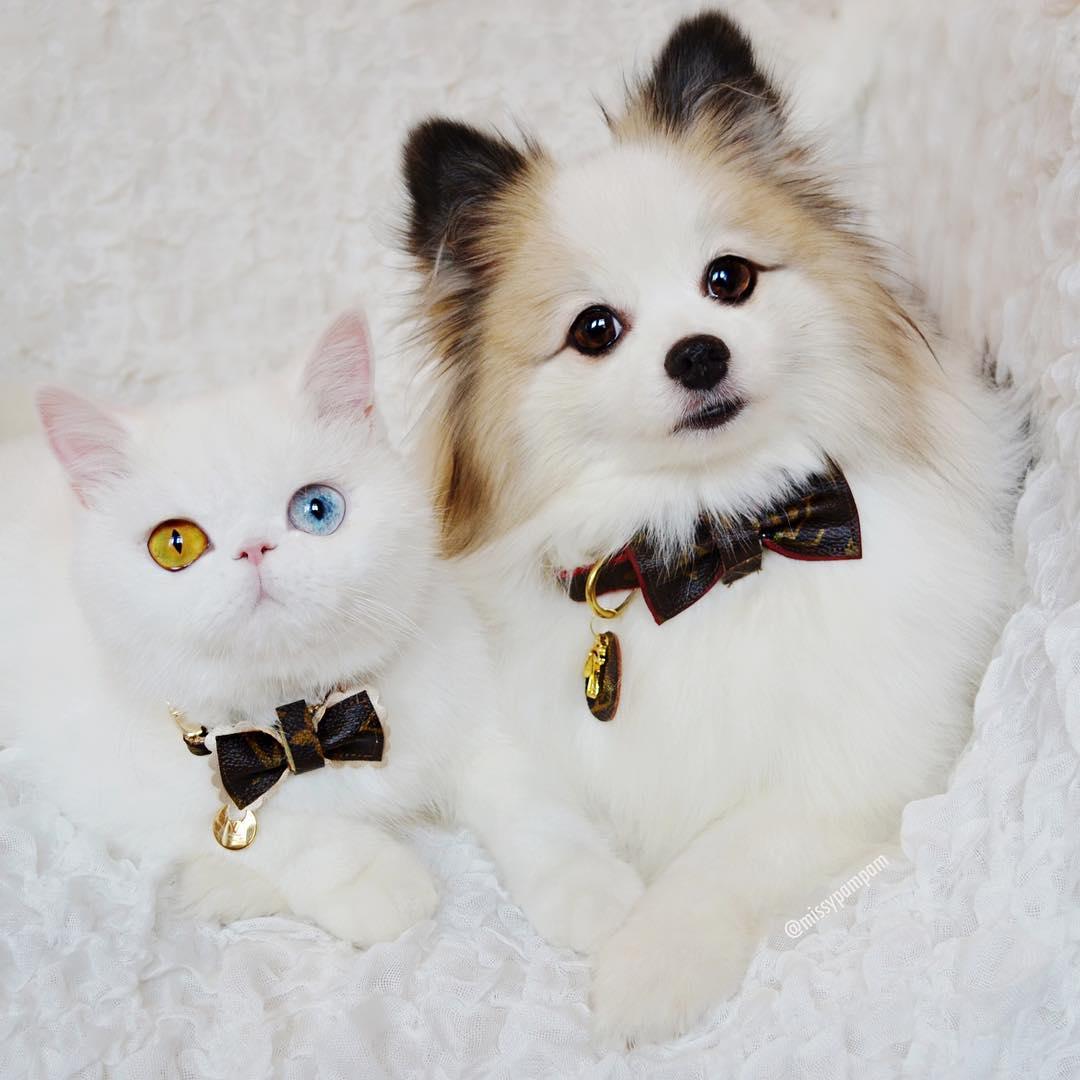 Пэм-Пэм и Пашмак