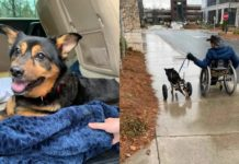 Чоловік з інвалідністю прихистив паралізованого пса