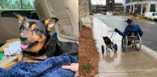 Мужчина с инвалидностью приютил парализованную собаку