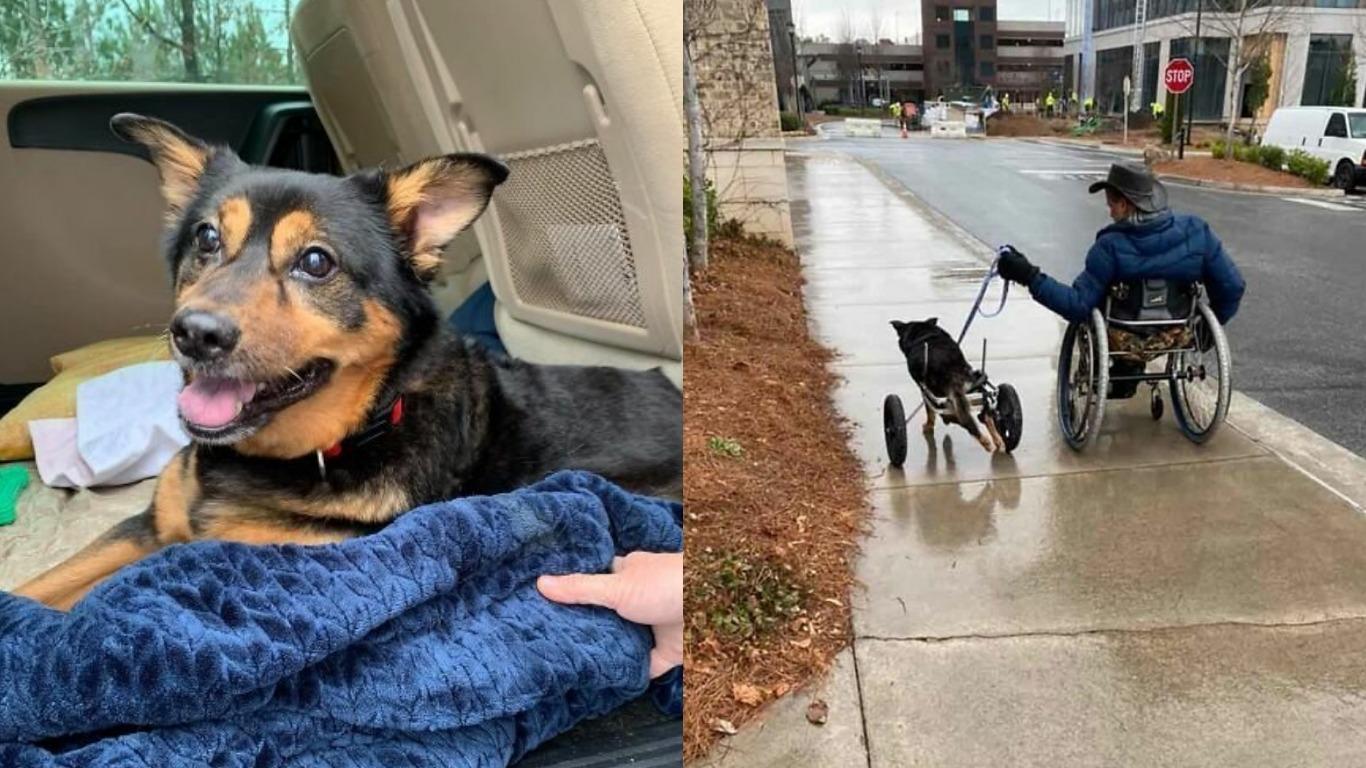 Оба на колясках, но счастливы вместе: мужчина с инвалидностью приютил парализованную собаку