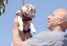 Ветеринар з США безкоштовно лікує тварин