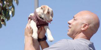 Ветеринар из США бесплатно лечит животных