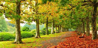 1 сентября - переход от лета к календарной осени