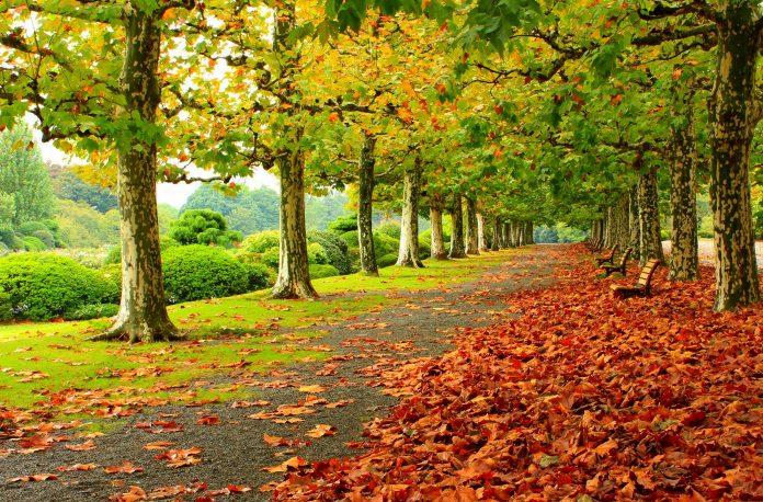 1 вересня - перехід від літа до календарної осені
