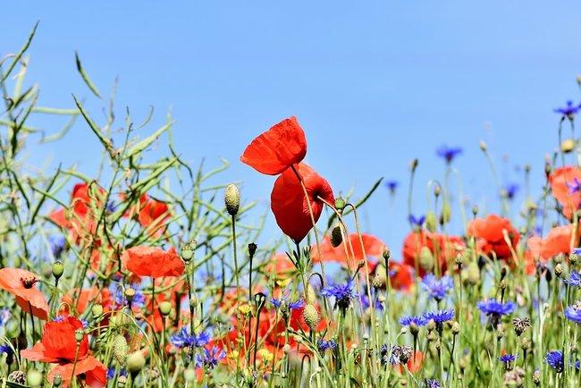 Не можна зривати квіти 30 серпня