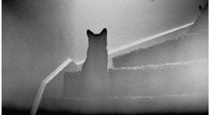 Кот-привид