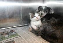 Собака врятувала кошеня
