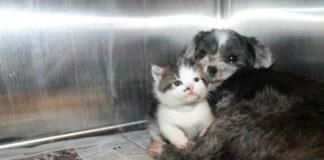 Собака спасла котенка