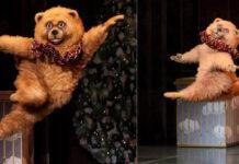 Феномен бостонського ведмедя