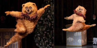 Феномен бостонского медведя