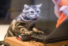 Котик за роботою