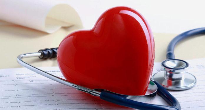 Створено клітинний атлас людського серця