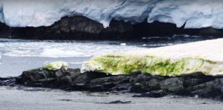 Арктика зеленеет