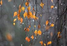 Народний календар осінь