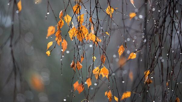 Народный календарь осень