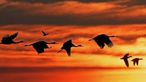 Журавли летят