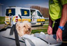 Скорая помощь для животных