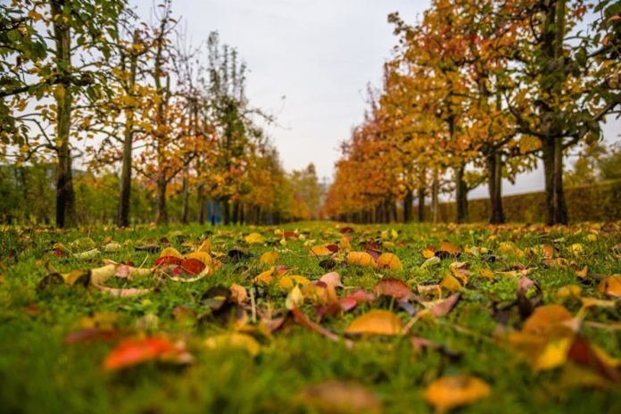 Погода в жовтні 2020 року - дощі в другій половині дня і перші заморозки
