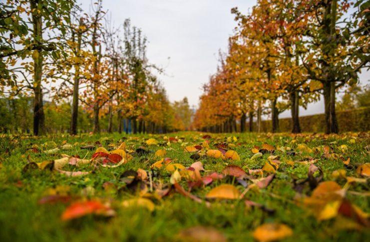 Погода в октябре 2020 - дожди во второй половине дня и первые заморозки