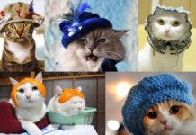 Котики в капелюшках