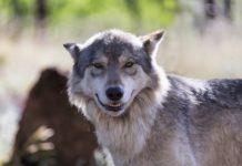 Тварини посміхаються