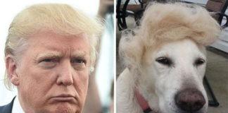 Собаки схожі на відомих людей