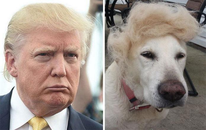 Собаки похожи на известных людей