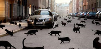 Чорні кішки - хто вони?