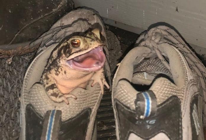 Уютный домик для жабы