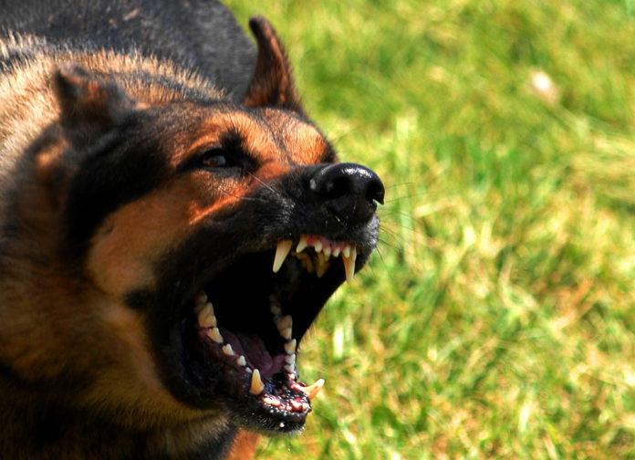 Агресивна собака