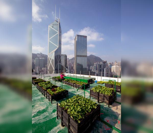 Гонконгские фермы на небоскребах