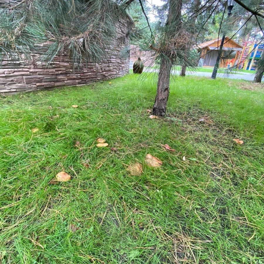 Домашня поляна