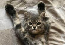 Кошеня знає толк у позуванні