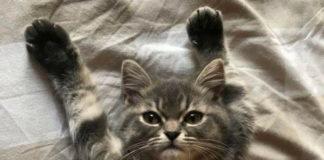 Котенок знает толк в позировании