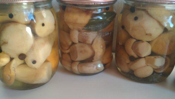 Які гриби можна маринувати