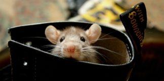 Мужчина нашел мышей в овсянке