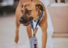 Собака стала работником автосалона
